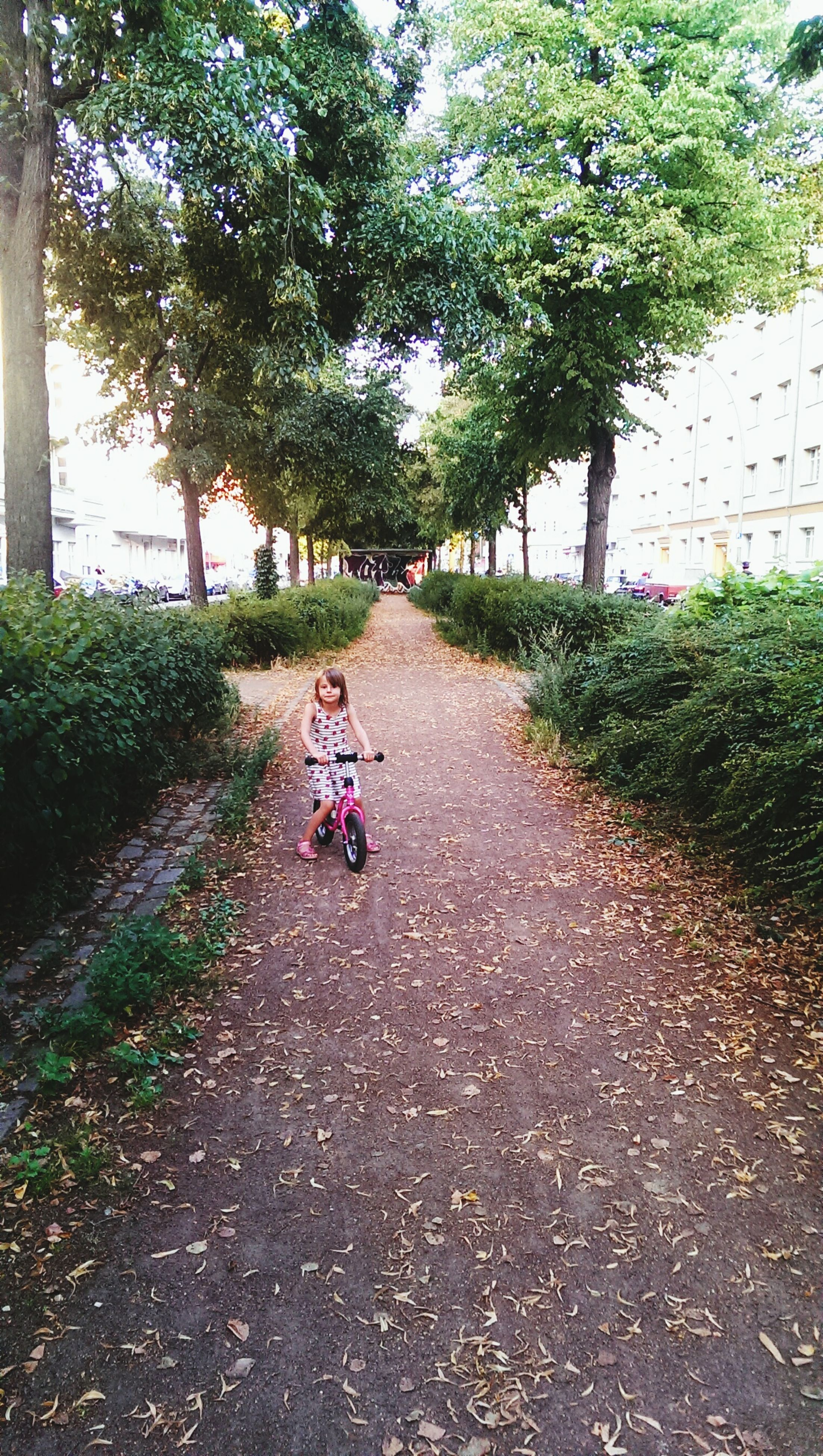 tree, the way forward, transportation, full length, road, lifestyles, bicycle, walking, street, leisure activity, rear view, diminishing perspective, childhood, park - man made space, mode of transport, day, riding, land vehicle