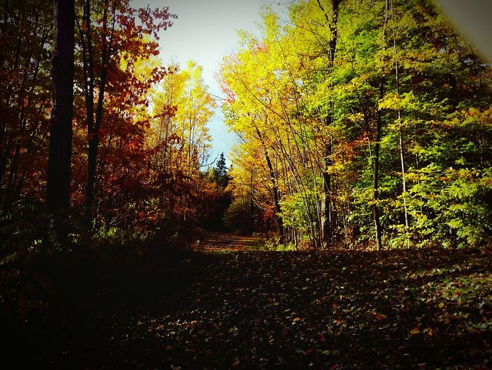 Fall Trees Colorful WoodLand First Eyeem Photo Nature Outdoors No People Tranquility Path Autumn