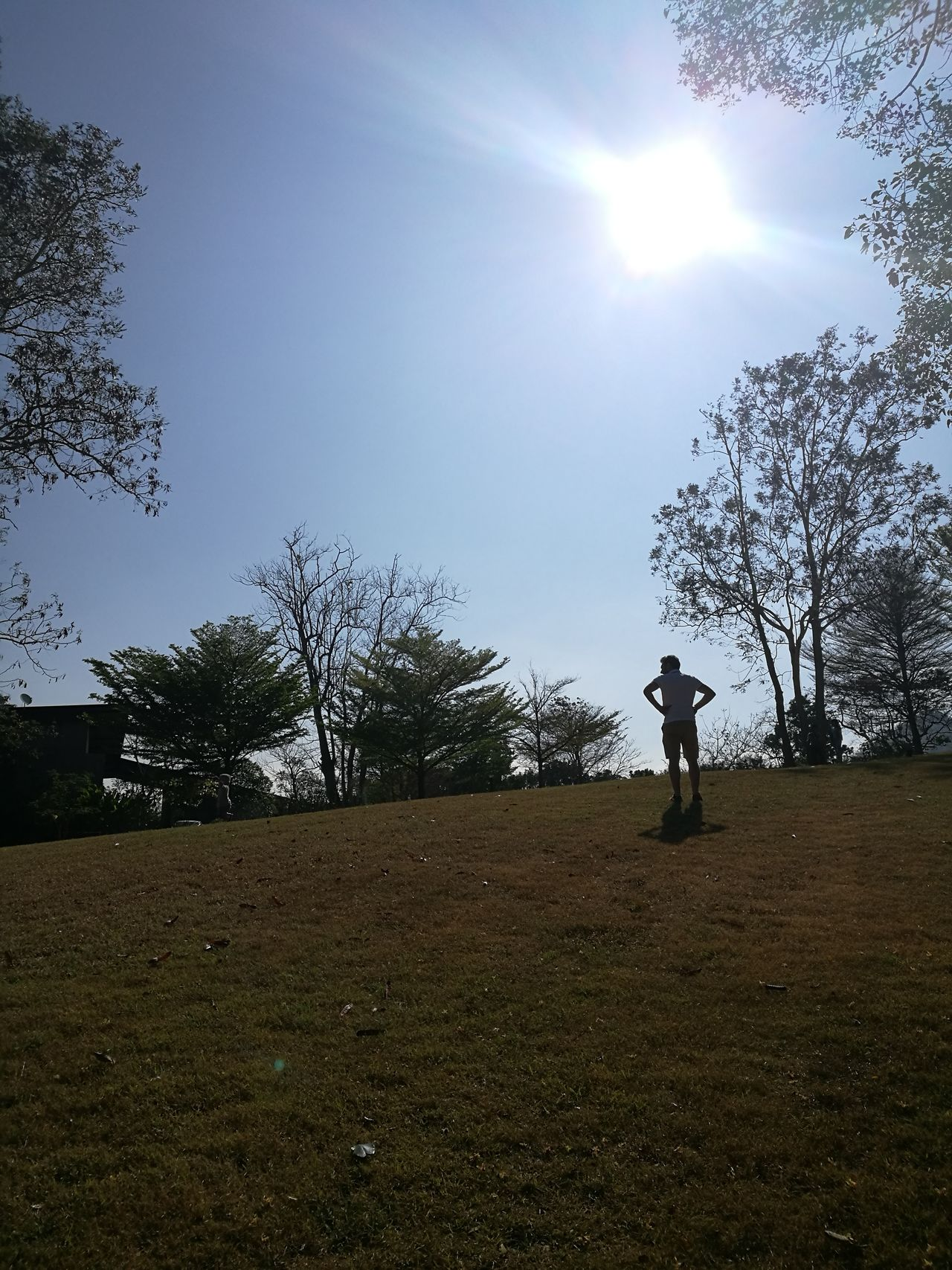 Sky Men Tree Outdoors Nature Green Color Nature Kaoyai Plant Day Thailand Tree Viewgarden