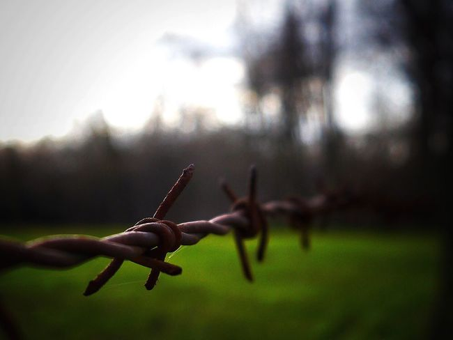 Photography Getting Creative Selective Focus Simple Things EyeEm Nature Lover Depht Of Field Nature Barbed Wire Getting Inspired EyeEm Best Shots