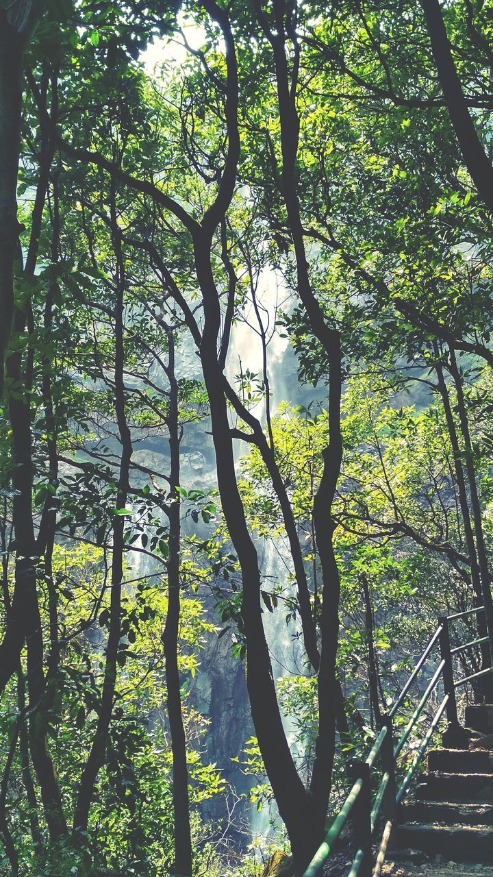 tree, tranquility, nature, growth, day, outdoors, beauty in nature, forest, branch, no people