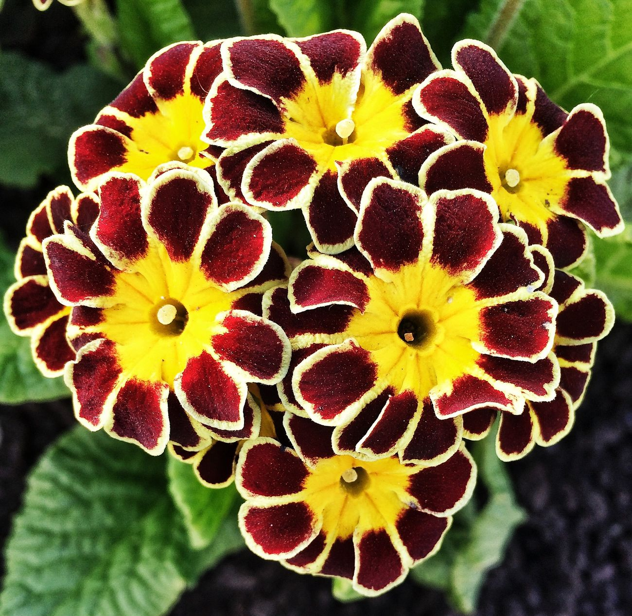 Flower Flowerporn Yellow Plants