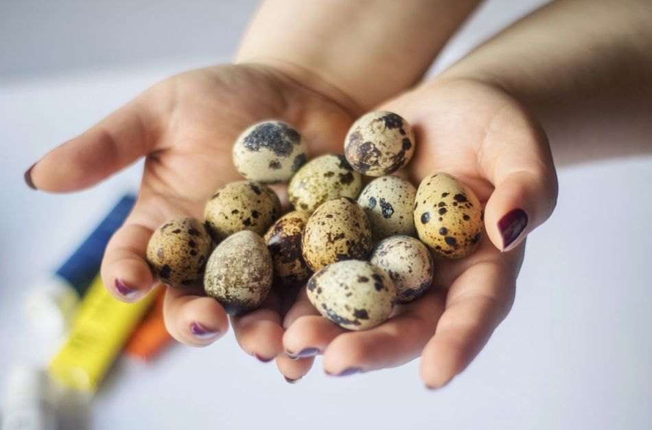 Human Hand Human Body Part Human Finger Close-up Food Eggs... Egg Many Easter Holding Holiday