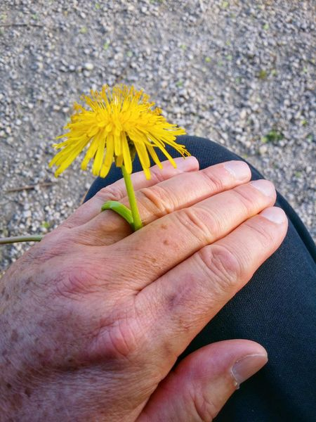 Married With Nature Mobile Photography Gestures Nature Flowers Dandelions Springtime Inspiring Harmony In Touch With Nature Earth Love Showcase April