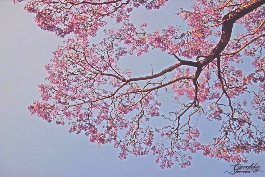 The perfect branch Flowers Taking Photos Trees Shillong