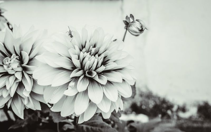 Black and white flower Flowers, Nature And Beauty