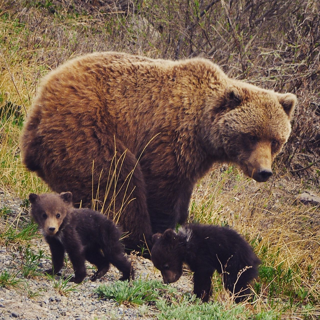 Beautiful stock photos of bear, Anchorage, Animal Family, Animal Themes, Animals In The Wild