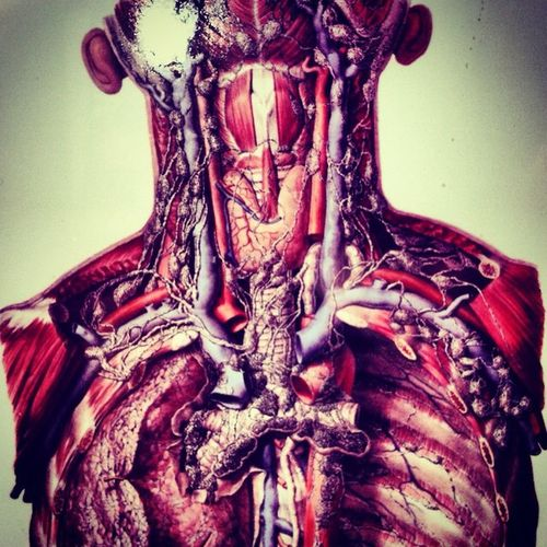 Thehumanbody Anatomy Insideview