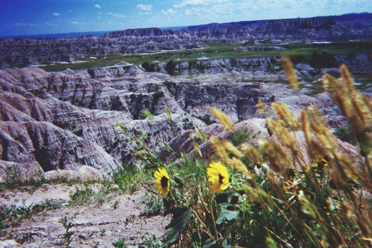 Nature Badlands National Park Flowers First Eyeem Photo