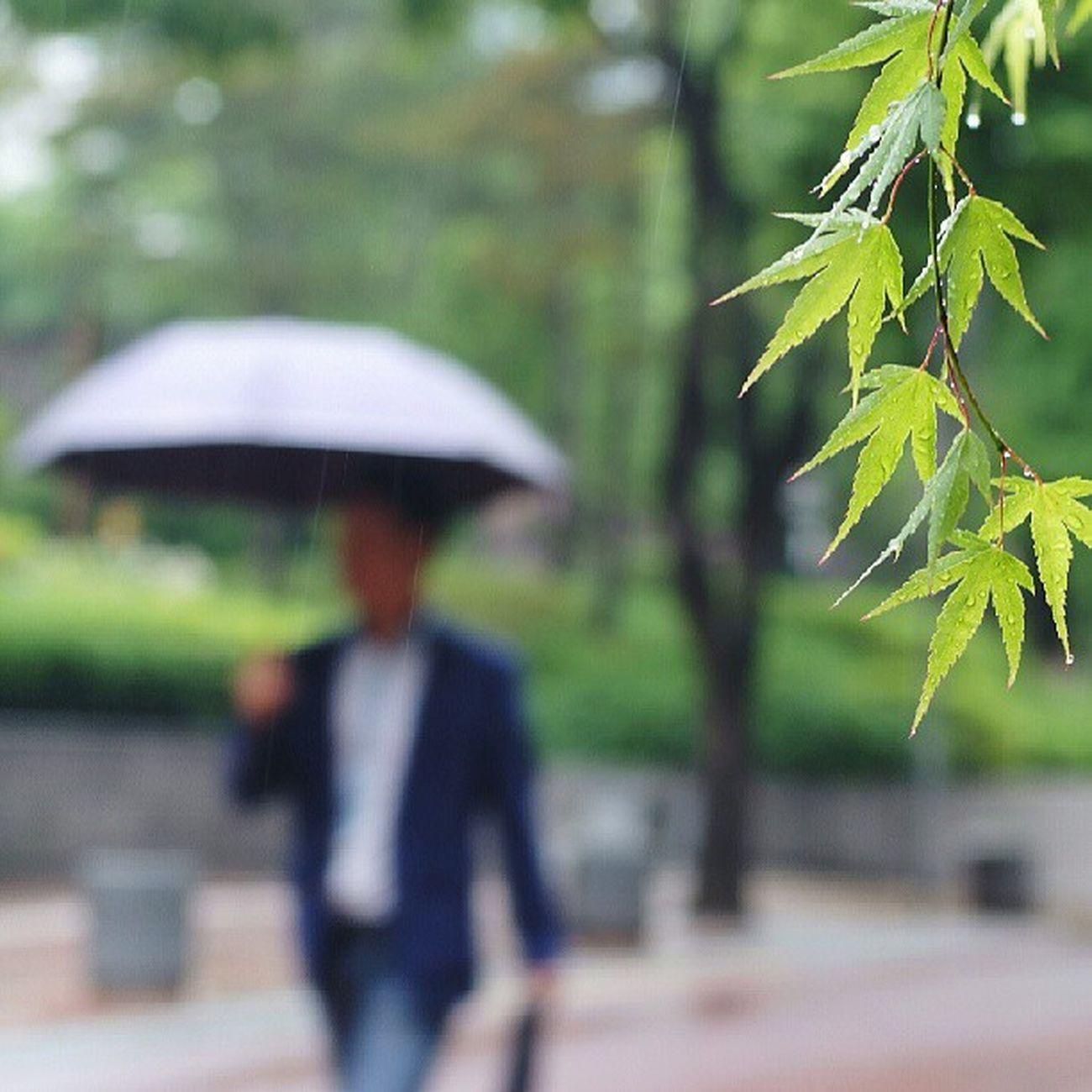 Robin_theme15 City of rain 장마 시작 뿅 서소문동