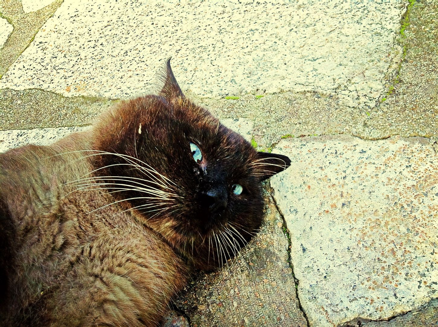 Piccolo the cat Catoftheday cat eyes First Eyeem Photo