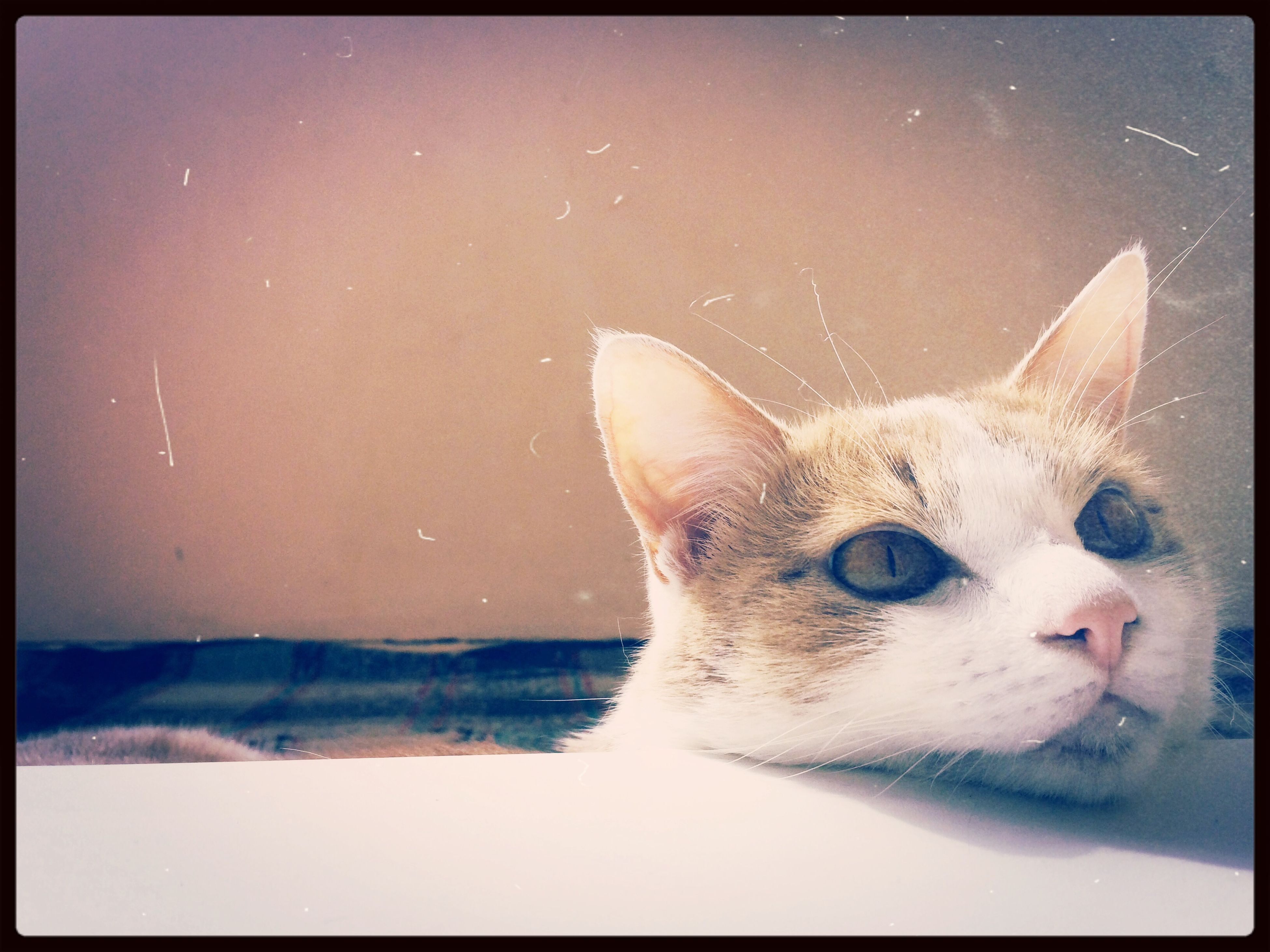 transfer print, one animal, animal themes, pets, auto post production filter, domestic animals, mammal, domestic cat, cat, close-up, water, animal head, indoors, nature, copy space, clear sky, dog, zoology, no people, feline