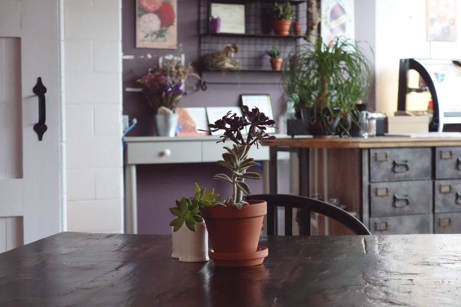 Flower Plant Potted Plant Vase Indoors  Flower Pot Home Interior Houseplant No People Nature Growth Table Home Leaf Cabinet Fragility Flower Head Day Succulent Succulents Restaurant EyeEmNewHere Rx100 Canada
