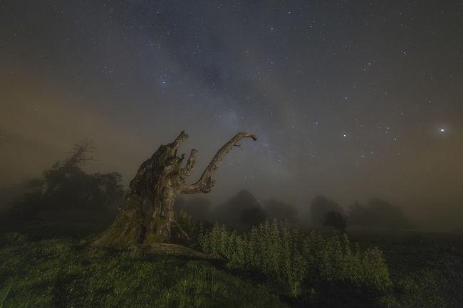 estaba sacando fotos en urbasa a este arbol seco, cuando derrepente se echo la niebla encima mio generando una atmosfera que pocas veces abia vivido en las salidas nocturnas. mientras que la via lactea se entredejaba ver en la niebla nocturna. Astronomy Dark Fog Galaxy Grass Landscape Nature Night Outdoors Scenics Sky Star Star - Space Star Field Tranquil Scene Tranquility Tree Tree