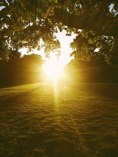Recharging Sunshine Sunset Light Sunset Park Meadow Hamburg