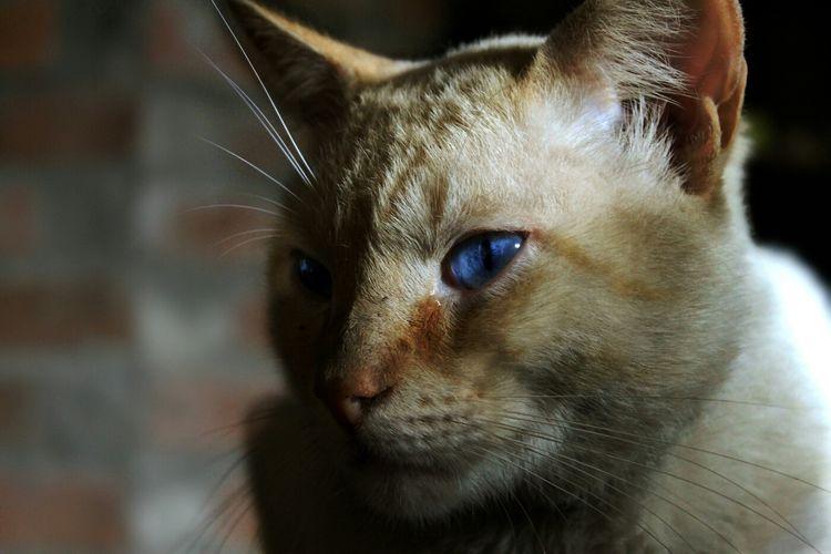 my cat Photo Smile Amia