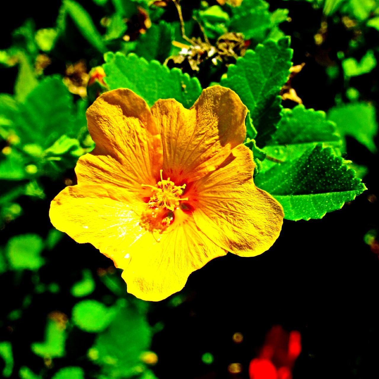 flower, petal, freshness, fragility, nature, beauty in nature, flower head, yellow, plant, growth, close-up, focus on foreground, outdoors, day, no people, blooming, leaf