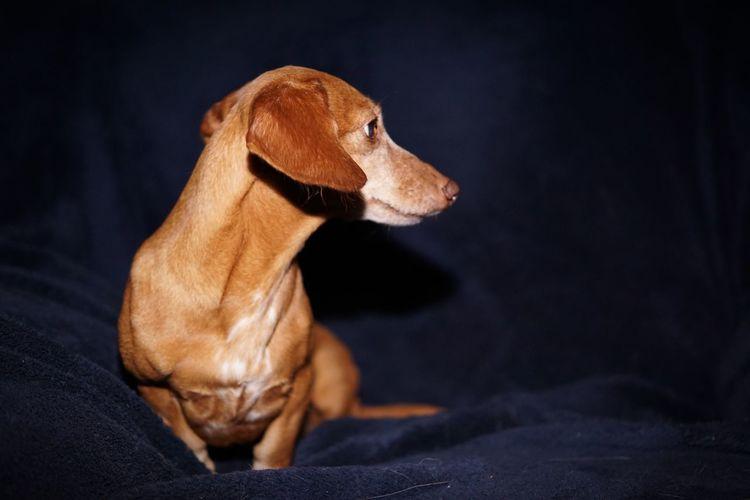 Little Old Lady Oldlady Dog Pets Domestic Animals One Animal Animal Themes Mammal No People