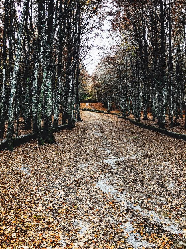 Hello World Photography Nature Tranquil Scene Autumn Day Forest Italy🇮🇹 Toscany Lovephotography  PhotoByMe Passion For Edits