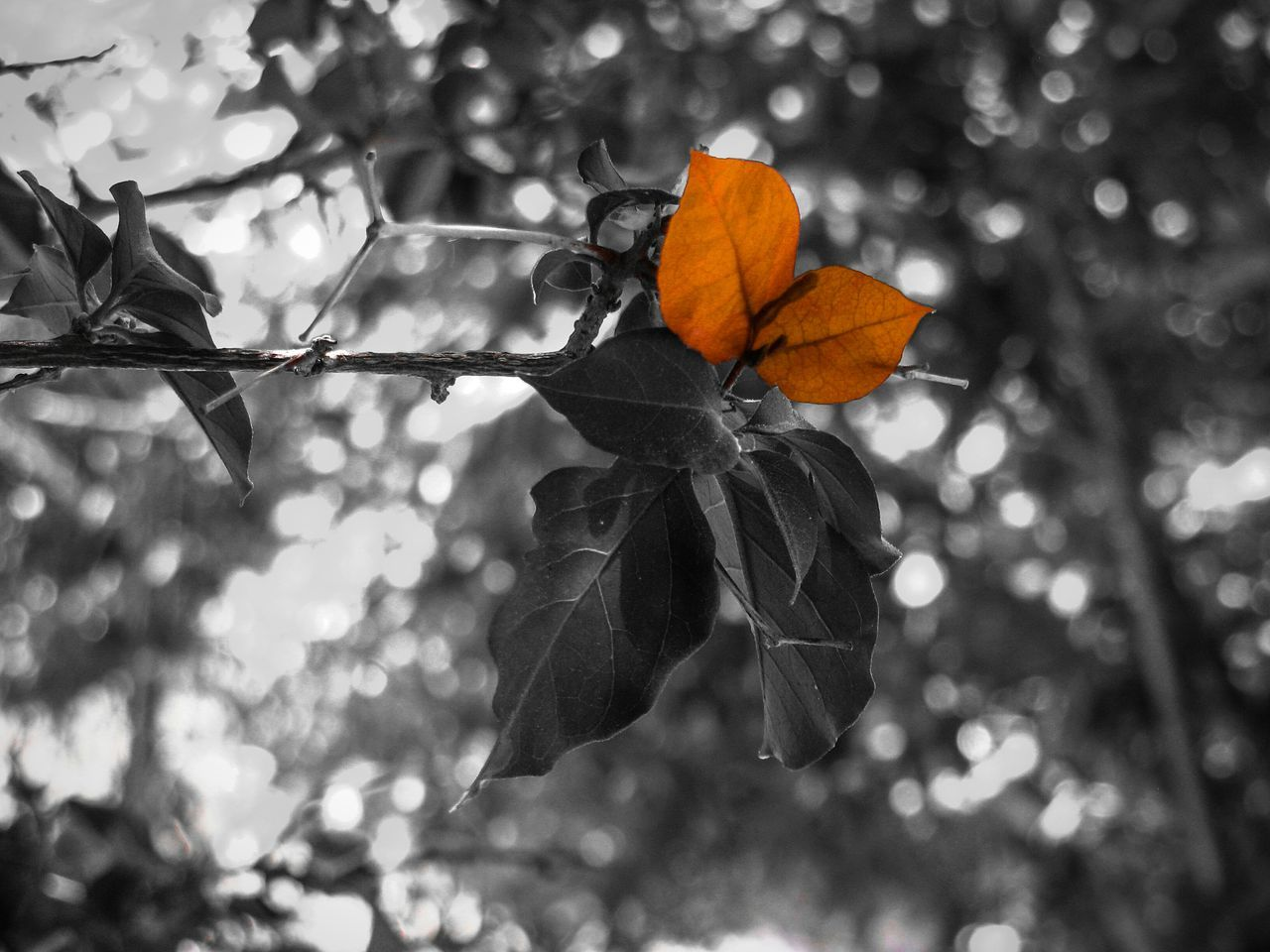 Leaves Red Leaves Carmine Black And Red Black Background Nature Leaf Fragility Beauty In Nature Freshness Tree Tree Branches Branch Plant The Great Outdoors - 2017 EyeEm Awards