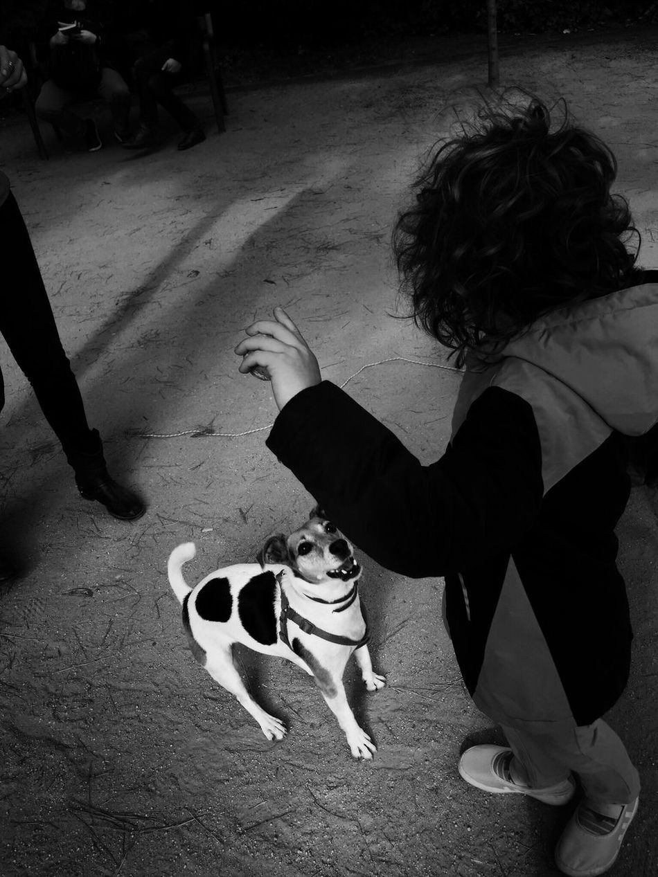 39 / 365 Animal Themes Black And White Day Dog Domestic Animals Full Length High Angle View Intriguing Leisure Activity Lifestyles Mammal Mystery One Animal One Person Outdoors Pet Owner Pets Real People
