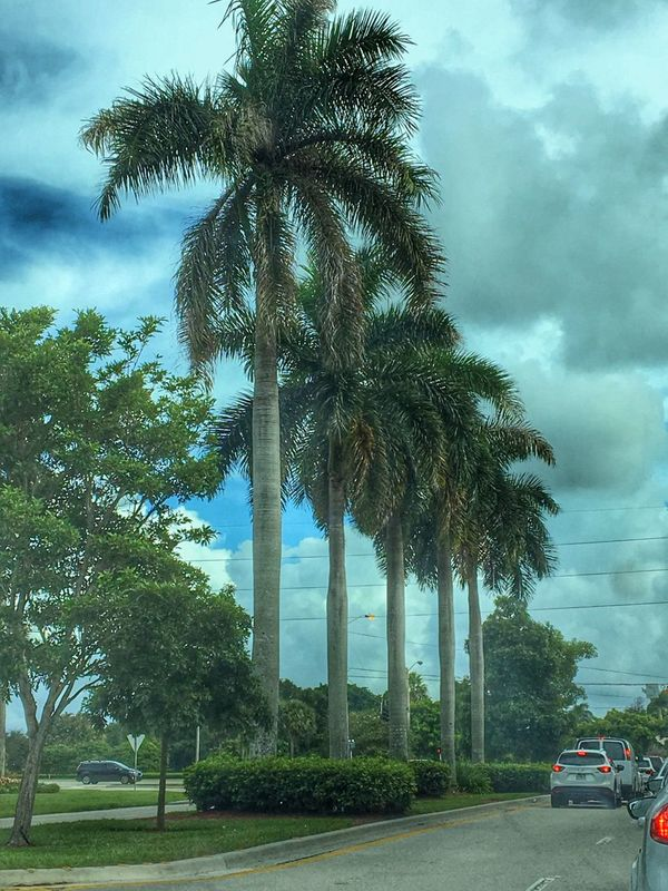 Transportation Land Vehicle Car Tree Mode Of Transport Road Palm Tree Growth Sky Tree Trunk Outdoors Day Cloud Green Color Cloud - Sky Tall - High No People Architectural Column Vehicle Cloudy