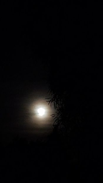 Moon Night Beauty In Nature Nature Sky Outdoors