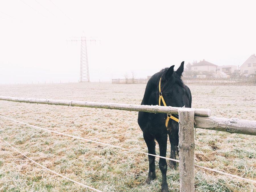 Vscocam Horse Fog Nature My Best Photo 2014
