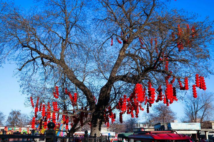 路边的红灯笼高高挂起,跳动着年味儿的韵律。