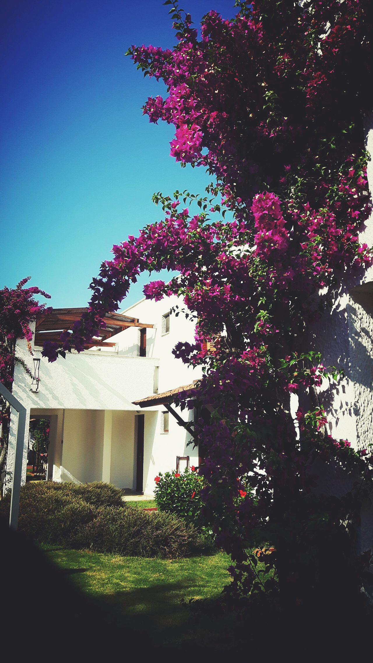 Architecture Built Structure Building Exterior Tree Day No People Outdoors Sky Nature Kastalia Photographer EyeEm Selects Photography Nature Summer Views Relax Holiday Summertime Summervibes Summer Tourist Resort Nature Photography Purple Purple Flower Pretty