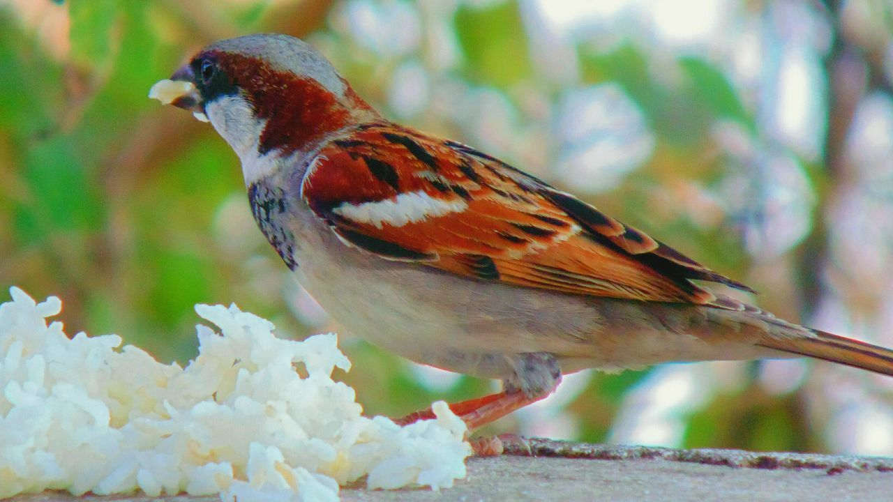 One Animal Animal Themes Bird Animals In The Wild Wildlife Perching Focus On Foreground Side View Close-up Branch Zoology Nature Robin Beauty In Nature Beak Outdoors No People Avian Sparrow Ricecake Naturelovers Nature Photography Selective Focus