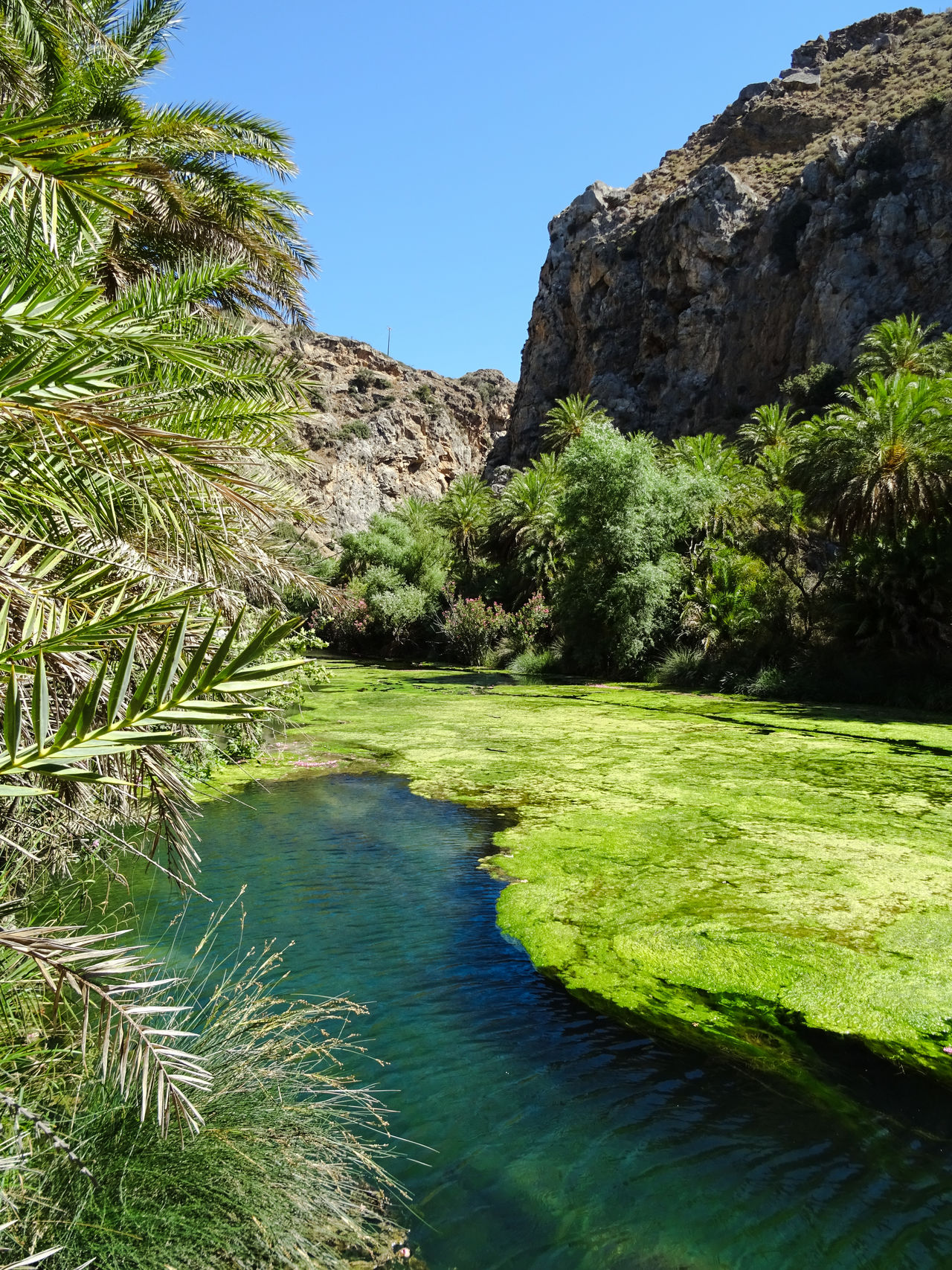Crete Forest Greece June 2016 Palm Palm Forest Palm Tree Preveli Preveli Beach River Rocks Rocks And Water Travel Water