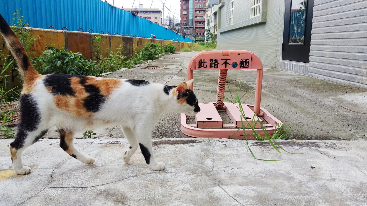 animal themes, domestic animals, pets, mammal, one animal, building exterior, domestic cat, outdoors, day, built structure, no people, architecture, dog, feline