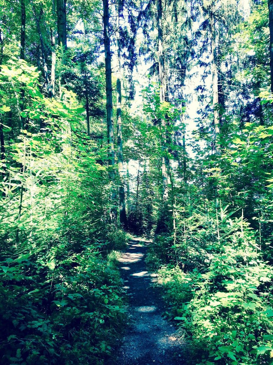 Biberist,Solothurn,Switzerland Forest Nature Beauty In Nature Outdoors Taking Photos Enjoying Life Vscocam From My Point Of View EyeEm Gallery Eeyem Walking Around Switzerland Hello World World EyeEm Best Shots Check This Out Hi! Photograph Hanging Out No People Eeyem Photography EyeEm Best Shots - Nature Traveling Life Relaxing