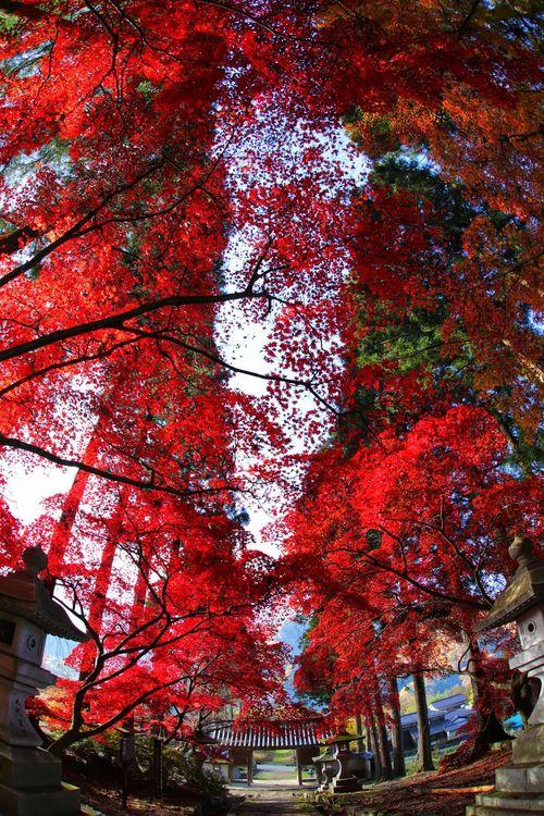 止まって見上げて🍁ゆっくり散歩🍁😳 紅葉 一目惚れんず Tree Low Angle View Day No People Growth Red Outdoors Full Frame Architecture Beauty In Nature Nature Sky Close-up Low Angle View Leaf