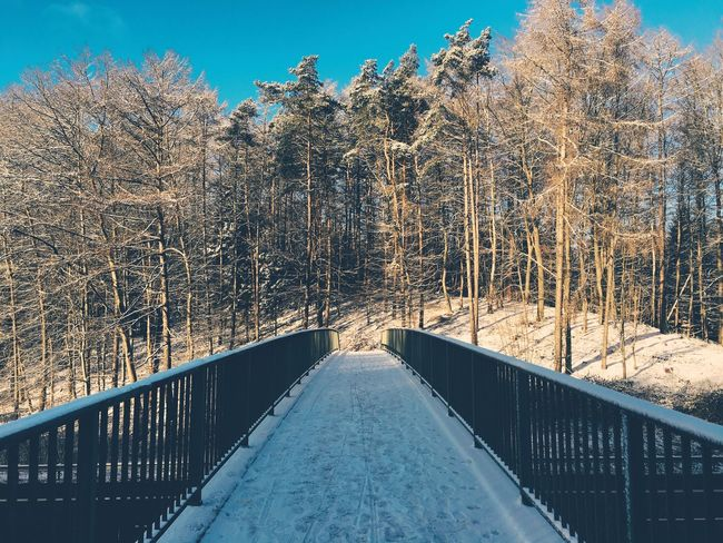 Railing The Way Forward Tree Bare Tree Tranquil Scene Scenics Day Tranquility Footbridge Nature Diminishing Perspective Sky Empty Road Blue Outdoors Snow Covered Narrow Long Beauty In Nature Bridge