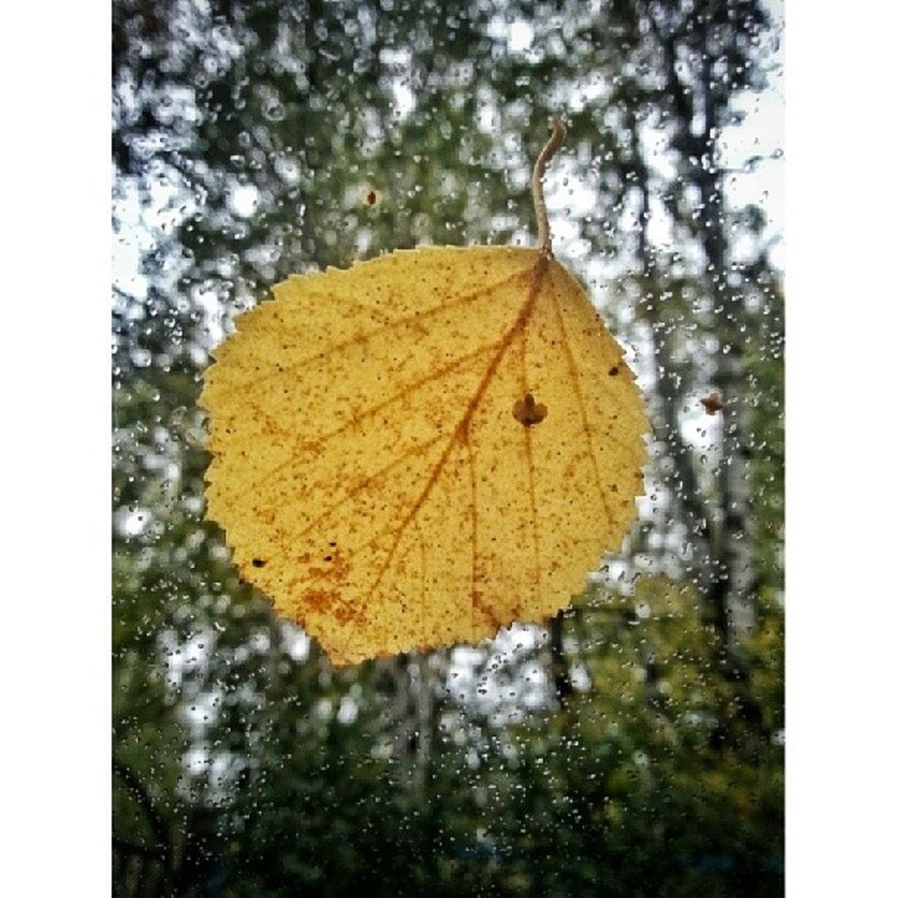 Leaf. Autumn Color Texture Texturama textureextreme textureporn rsa_ladies rsa_minimal tyumen instatyumen russia_ww nature photorussia phototag_it photoworld ru naturelovers nature_shooters nature_photography