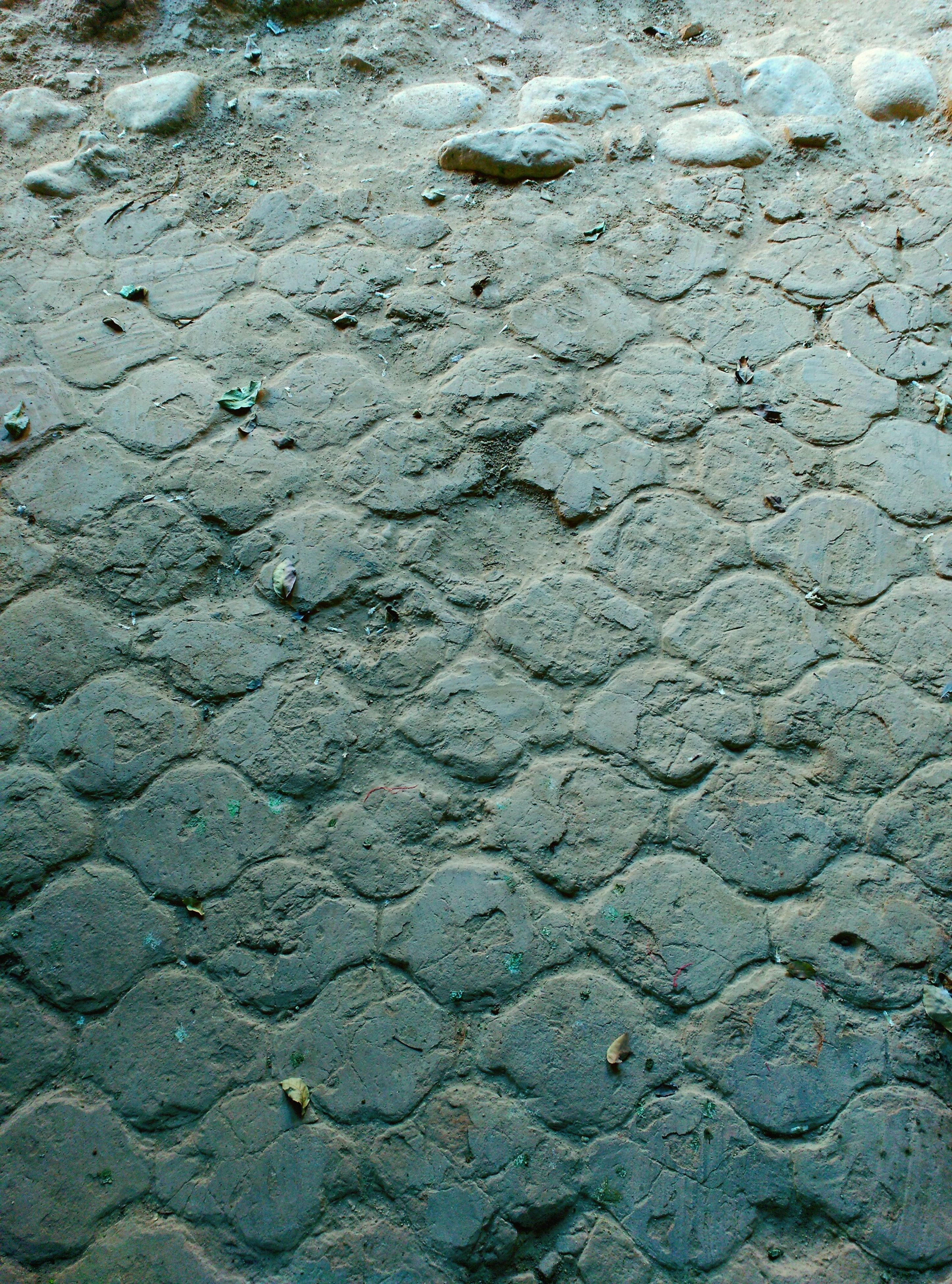 high angle view, pattern, no people, nature, full frame, outdoors, backgrounds, textured, day, close-up, paw print