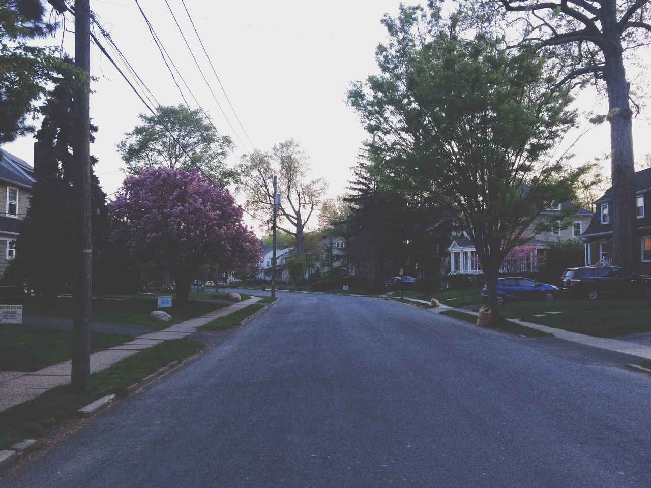 Street Amidst Houses And Trees At Dusk