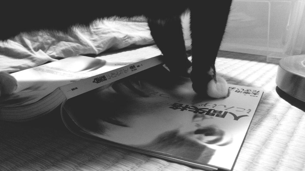 Cat 人間失格