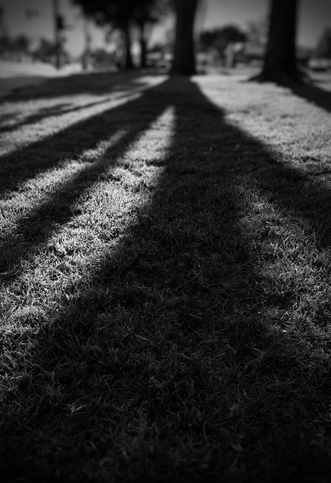 Long Shadows Silhouettes Sunset Silhouettes Depth Of Field Peaceful Shadows Afternoon Sun