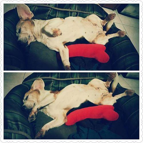 哪門子睡姿 Mymilinbaby Beagle
