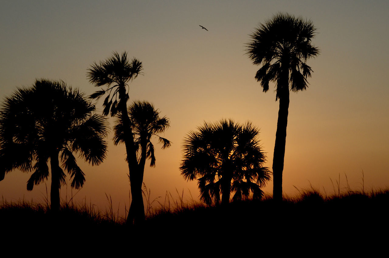 Sunset at Clearwater beach Florida Beach Beachphotography Beauty In Nature Clearwater Clearwater Florida Clearwaterbeach Nature Nightphotography Non-urban Scene Palm Palm Tree Palm Tree Palm Trees Scenics Silhouette Silohette Sky Sun Set Sunset Tranquil Scene Tranquility