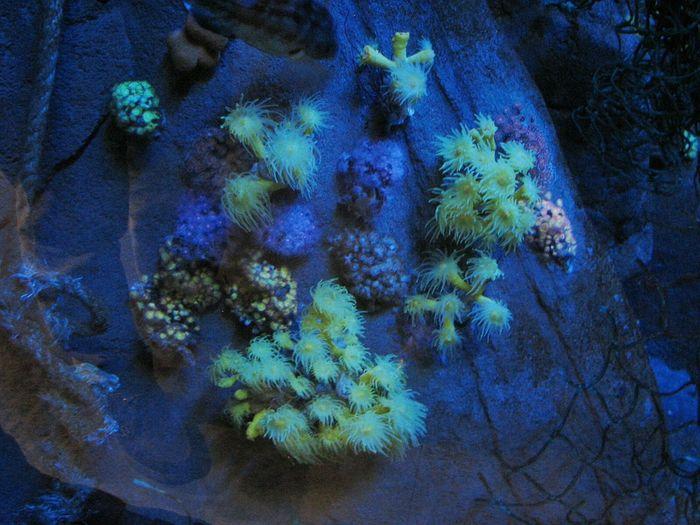 Acuariosevilla Sevilla #andalucía Corales Coralesdecolores Oscuridadbajoelmar Colorful Nature