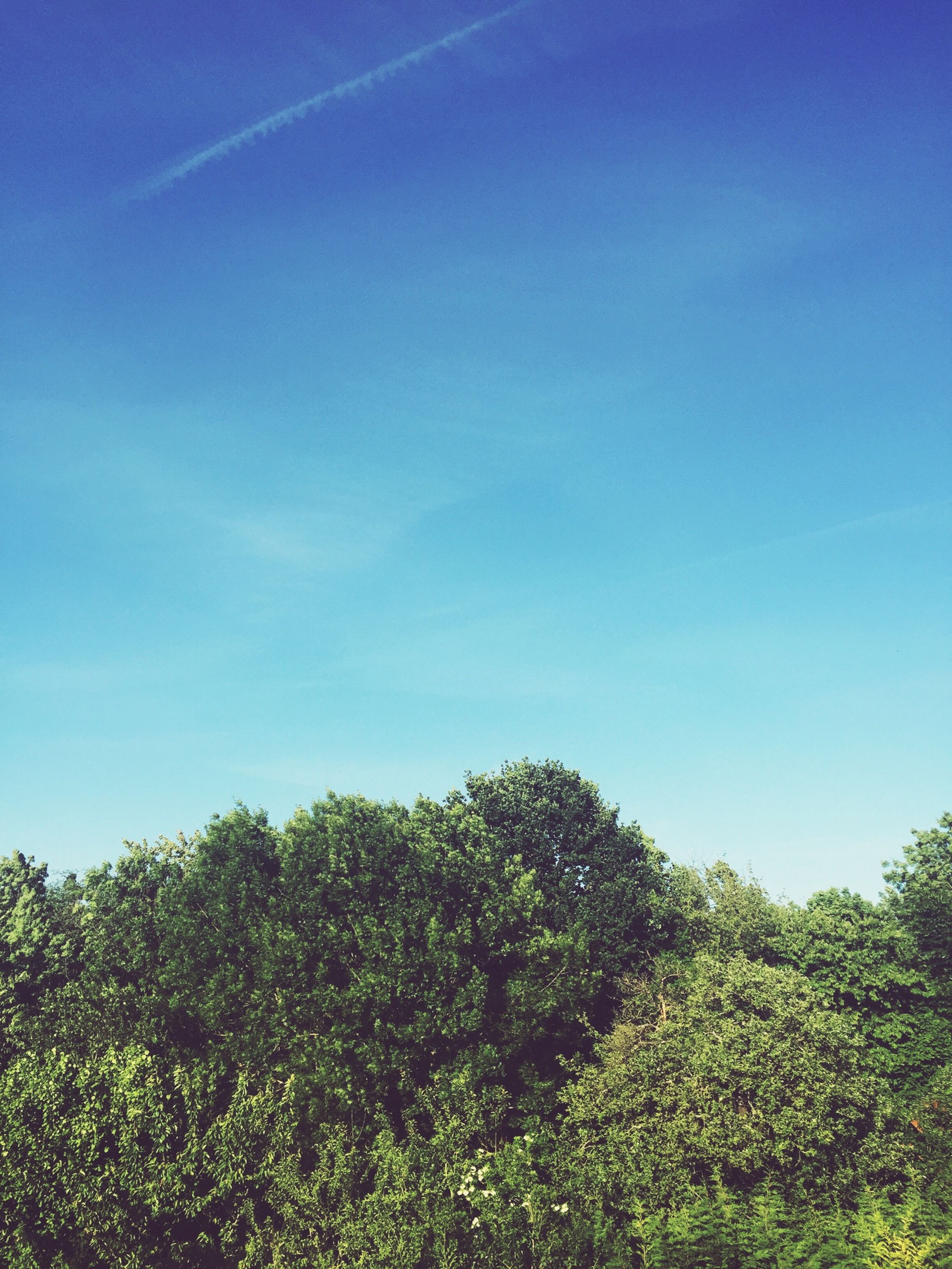 blue, tree, tranquility, growth, clear sky, tranquil scene, beauty in nature, green color, nature, copy space, scenics, landscape, sky, field, low angle view, plant, grass, green, non-urban scene, day