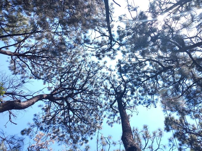 No filter, no edit, just photography BeliveBeauty In Nature Outdoors Forest Nature Tree Sky Day Life Beautiful Blue Sky Perspectives Personal Perspective Perfect Day Peaceful View EyeEmNewHere