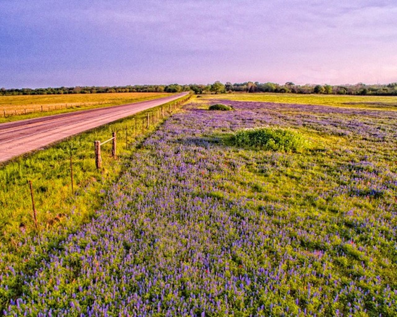 Bluebonnets beautify country roads. CentralTexas Landscape_Collection Highways Nature_collection Flowers