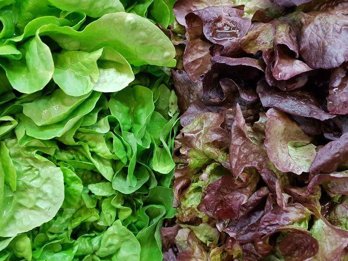 Leaf Backgrounds Vegetables Photo Vegetable Market Vegetables Freshness Fresh Produce Food Photography Vegetarian Food Vegetable Salad Salad Time Green Salad Green Color Green Vegetables Leaf Salad