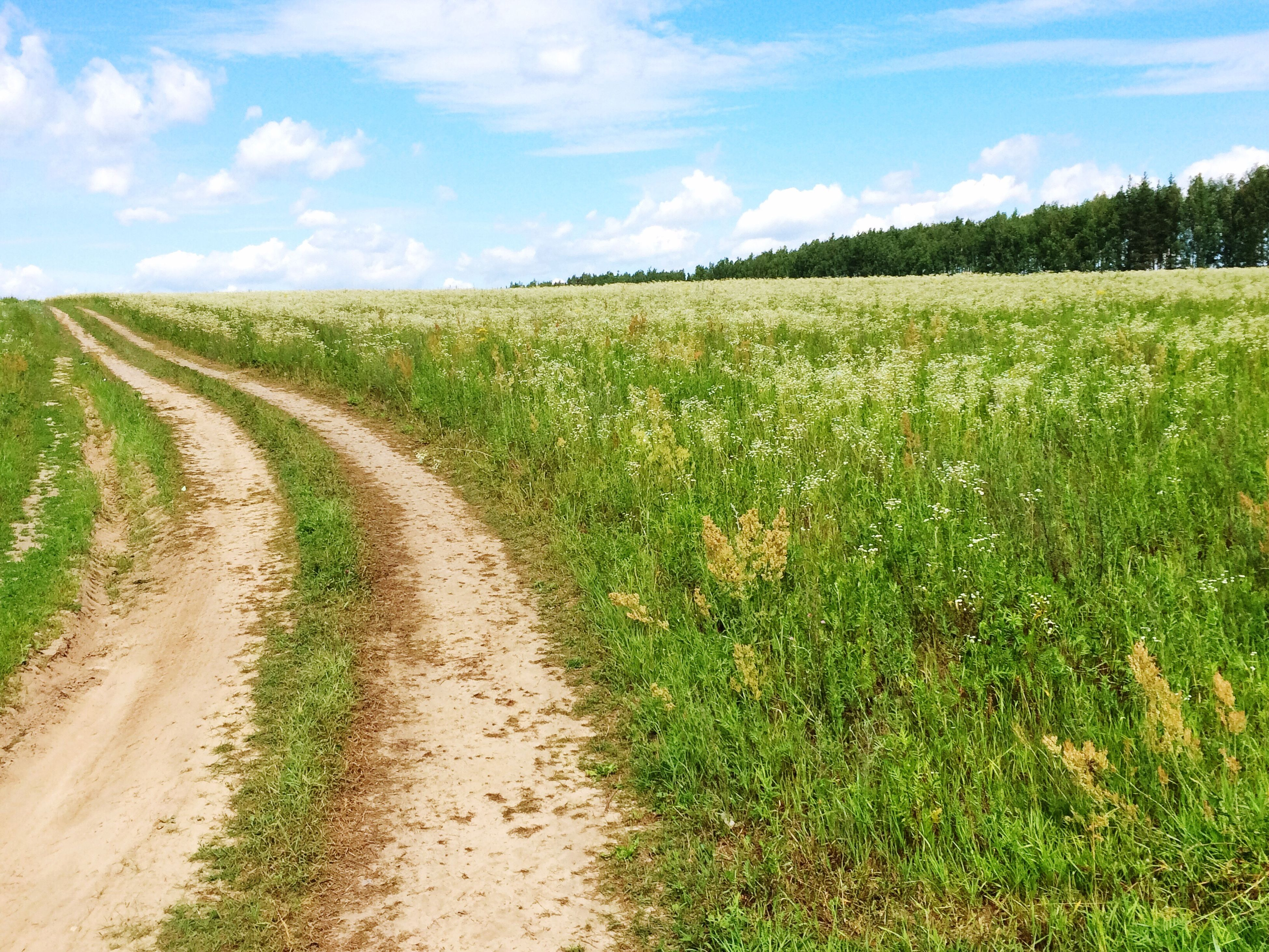 landscape, agriculture, field, rural scene, tranquil scene, tranquility, sky, growth, grass, the way forward, crop, nature, scenics, beauty in nature, dirt road, green color, cultivated land, plant, diminishing perspective, horizon over land, vanishing point, day, cloud, remote, cloud - sky, outdoors, non-urban scene, grassy, no people, idyllic, green
