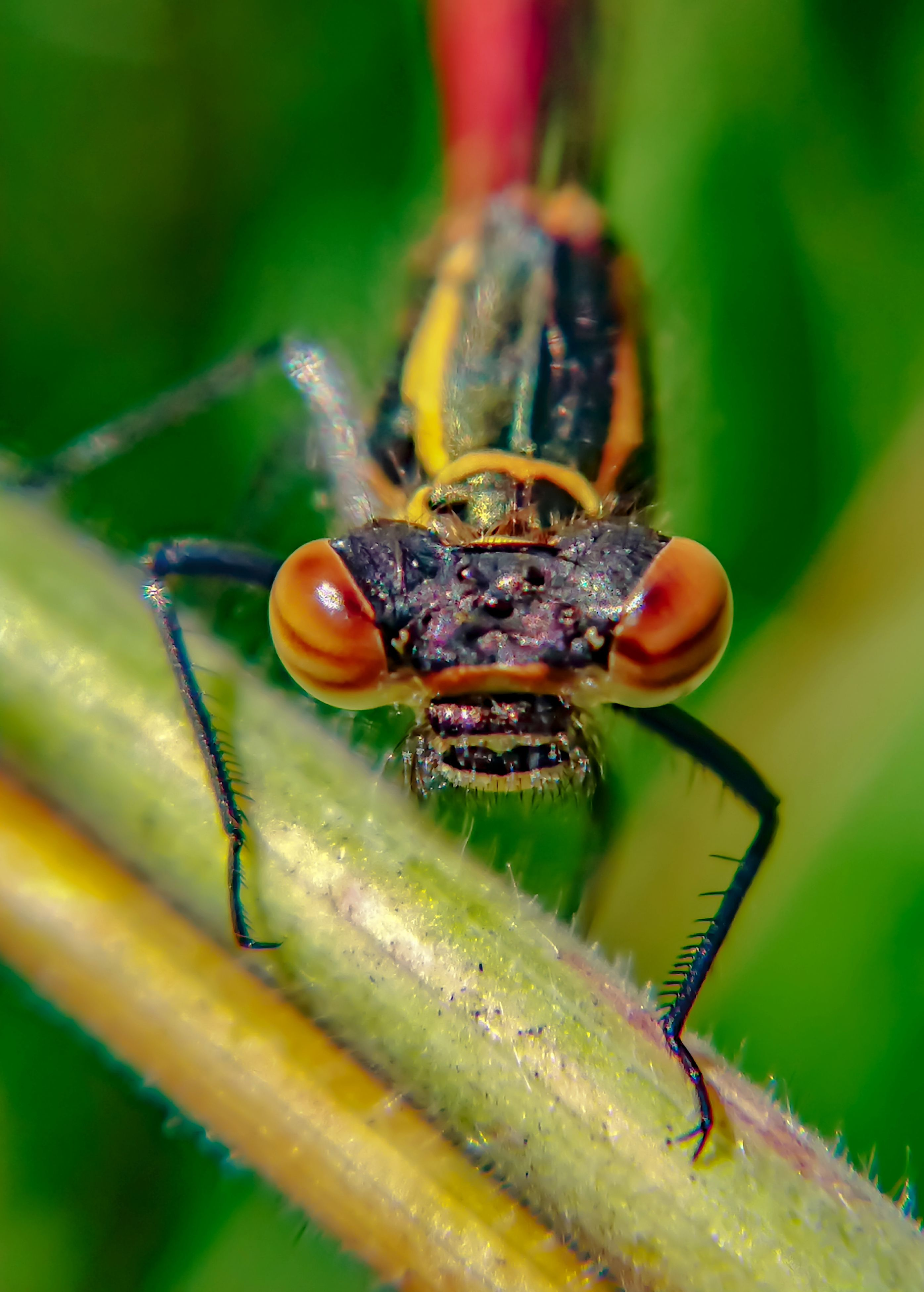 insect, animals in the wild, animal themes, one animal, green color, animal wildlife, close-up, nature, outdoors, day, no people, leaf